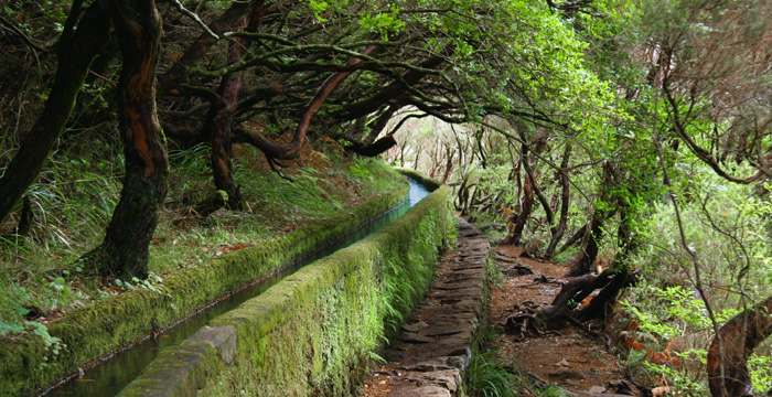 Levada Walks - Madeira island