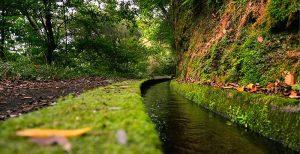 Levada Wlaks - madeira island